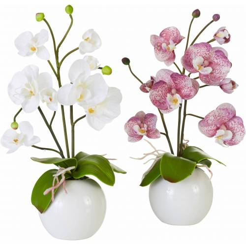 I.GE.A. Kunstpflanze »Orchidee« Orchidee, , Höhe 35 cm