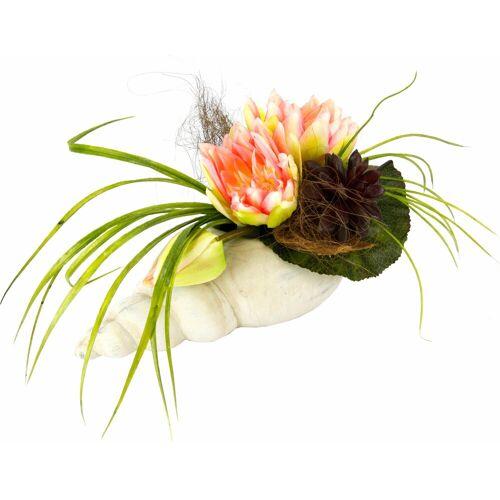 I.GE.A. Kunstpflanze »Gesteck Seerose in Muschel« Seerose, , Höhe 20 cm, rosa