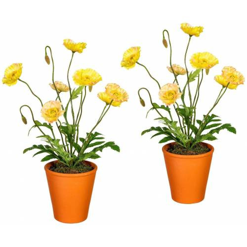 Gasper Kunstpflanze »Mohnpflanzen«, 2er Set im Tontopf, H:38 cm, gelb