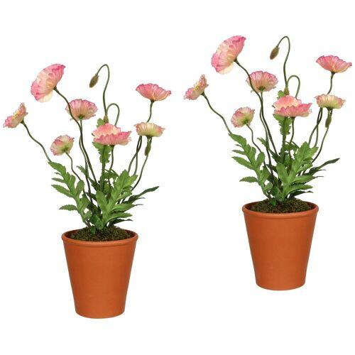 Gasper Kunstpflanze »Mohnpflanzen«, 2er Set im Tontopf, H: 38 cm, rosa