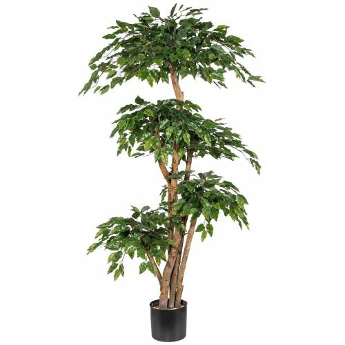 Gasper Kunstpflanze »Ficus Benjamini«, H: 170 cm, grün
