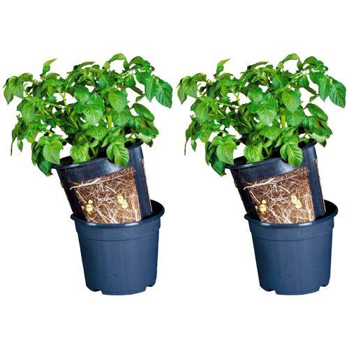Floragard Anzuchttopf »Potato Pot«, 2 Stück, ØxH: 30x27 cm, schwarz