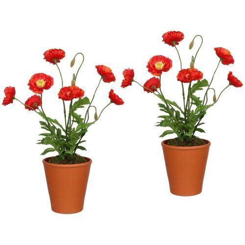 Gasper Kunstpflanze »Mohnpflanzen«, 2er Set im Tontopf, H: 38 cm, orange