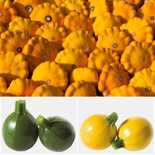 Volmary Set: Zucchini , 3 Sorten im Mix, gelb