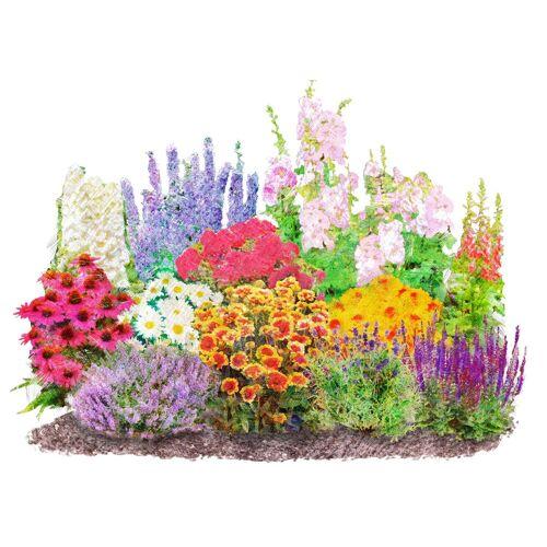 BCM : Beetpflanzen-Set »Landhausgarten«, 12 Pflanzen