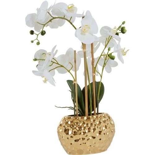 Leonique Kunstpflanze »Orchidee« Orchidee, , Höhe 55 cm, weiß-goldfarben