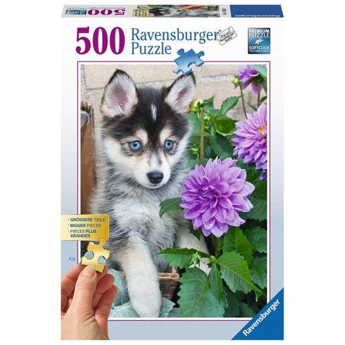 Ravensburger Puzzle »Putziger Husky«, 500 Puzzleteile
