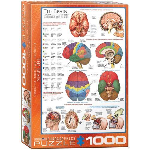 empireposter Puzzle »Das Gehirn Funktion, Anatomie und Chirurgie - 1000 Teile Puzzle im Format 68x48 cm«, Puzzleteile
