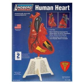 Lindberg, Menneskeligt Hjerte, Byggesæt, 1:1