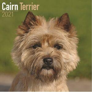Cairn Terrier 2021 Wall Calendar