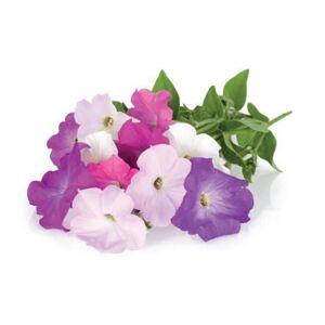 Click and Grow plantekapsel - Petunia - 3 stk. kapsler