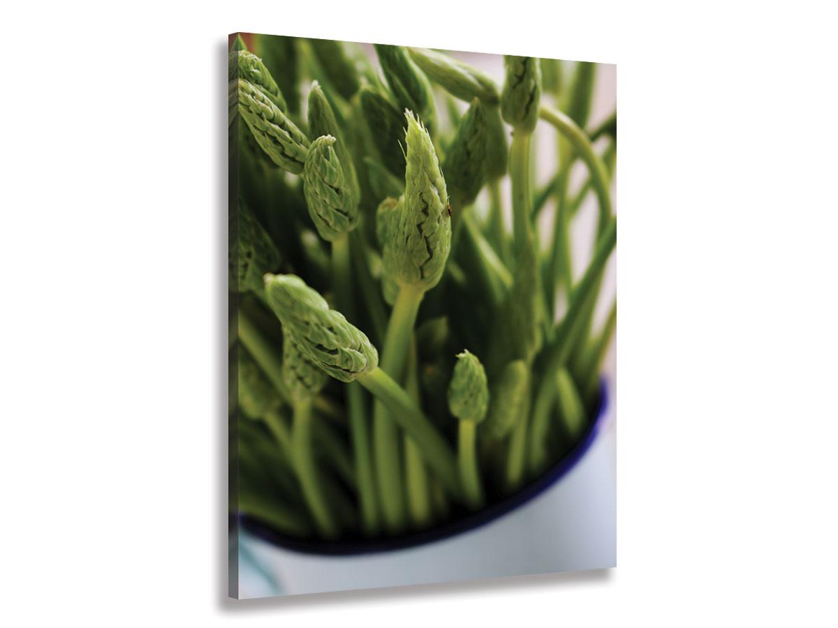 Hexoa Tableau graine germée verte Toile imprimée