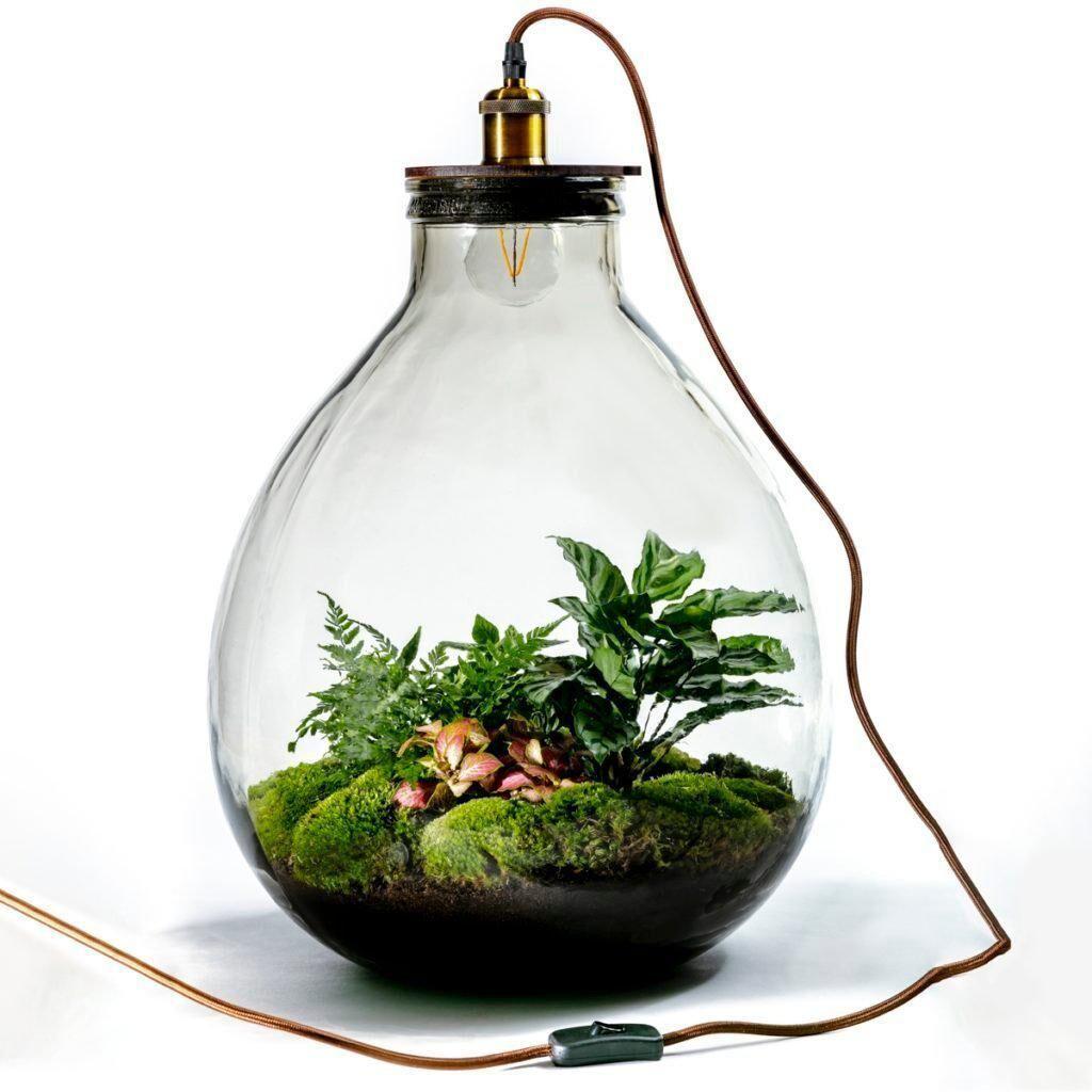 Growing Concepts Kit ampoule terrarium en verre - mélange botaniques 54x32cm