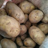 Au champ bio Pomme de Terre Bernadette Bio - 5kg <br /><b>13 EUR</b> Pourdebon.com