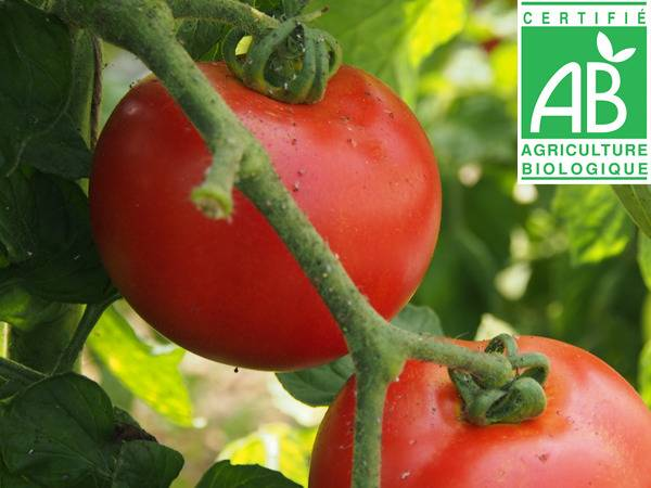 Mon Petit Producteur Tomate Ronde Paola Bio [vendue Par 3 Kg]