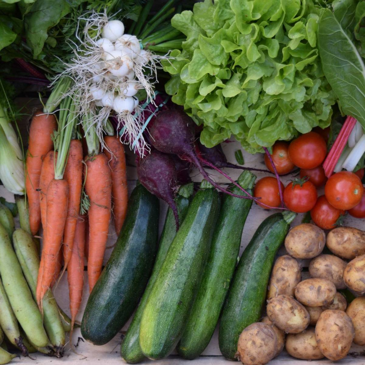 Julien Bouche - Maraîcher Bio Petit Panier De Légumes Bio - 3kg