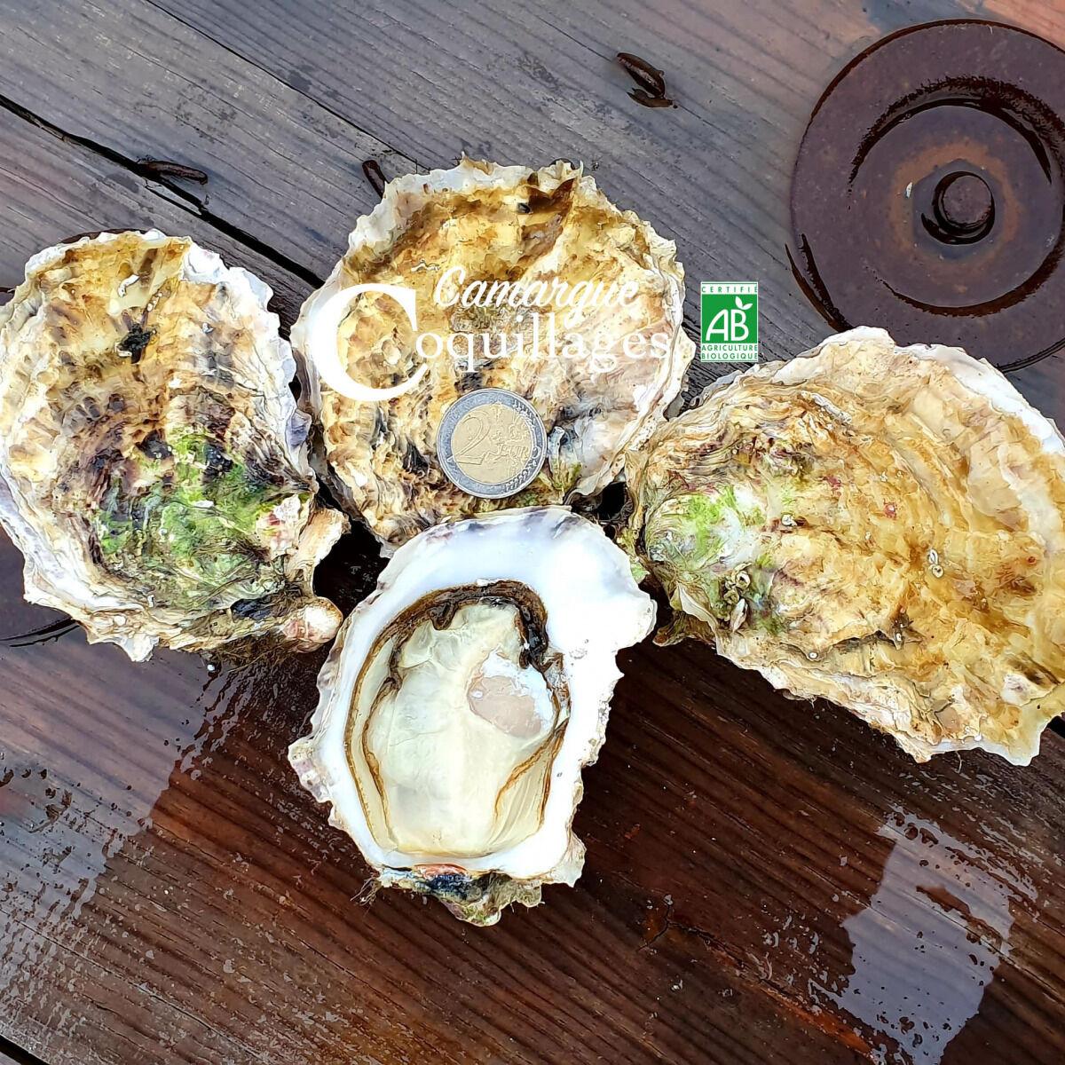 Camargue Coquillages La Perle De Camargue Huîtres Creuses Bio - Grosses À Cuire