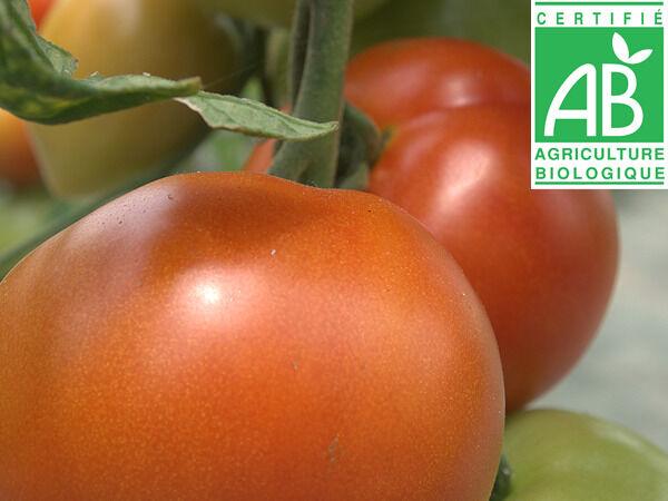 Mon Petit Producteur Tomate Ronde Bio Paola [vendu Par 3kg]
