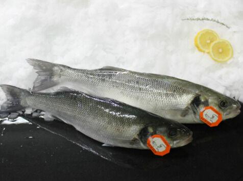 Pêcheries Les Brisants - Ulysse Marée Bar De Ligne - Vidé Et Écaillé - 1 Pièce / 500g