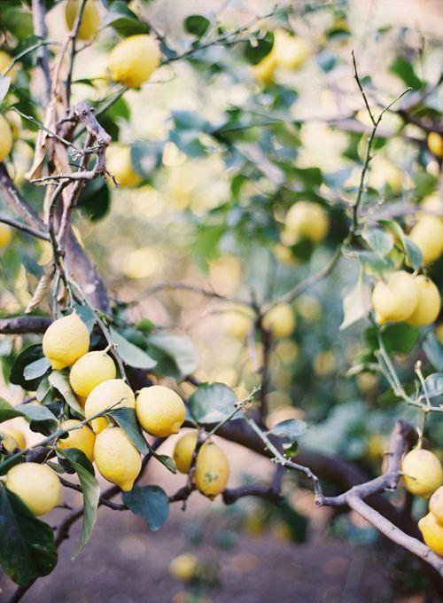Graines Précieuses Marinade Aux Citrons Confits Bio De Nice, Aux Épices Douces Et Gingembre Frais Râpé.