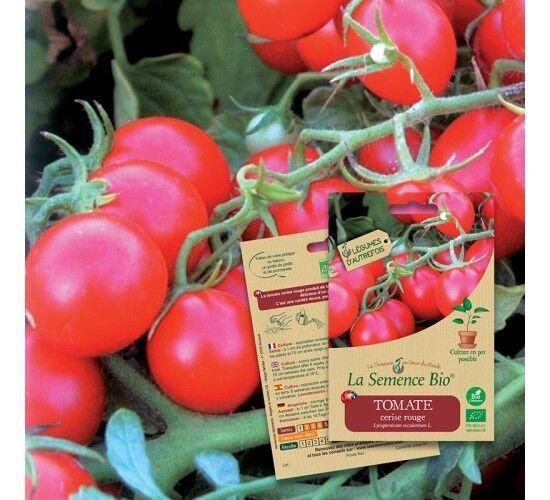 La Semence Bio Graines de TOMATE Cerise rouge BIO
