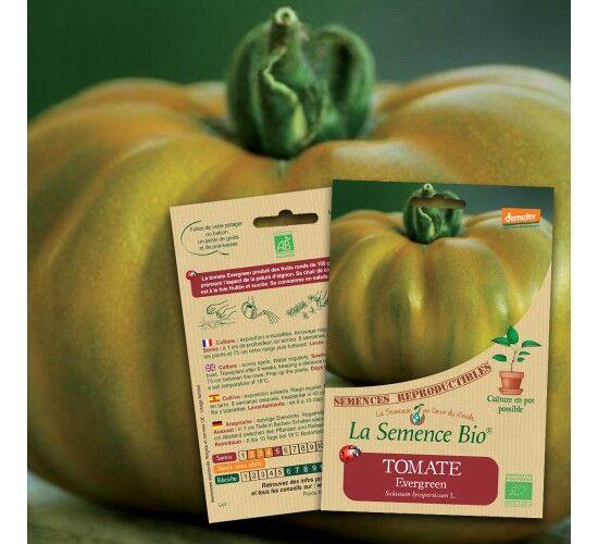 La Semence Bio Graines de TOMATE Evergreen BIO