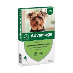 Advantage Nr. 40 pour chien S 2 pièces