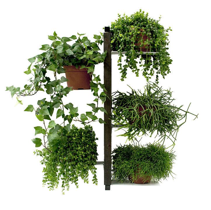 LE ZIE DI MILANO porte-plantes fixé au mur ZIA FLORA (H 66 cm / Noir - Hêtre massif et acier)