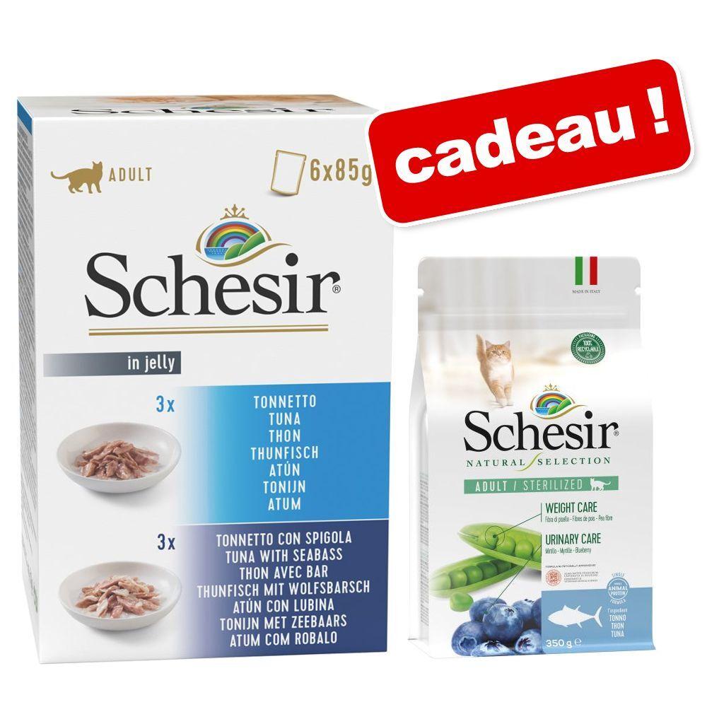 Schesir 5x85g thon, quinoa en gelée Schesir nourriture humide pour chat + 1 sachet offert!