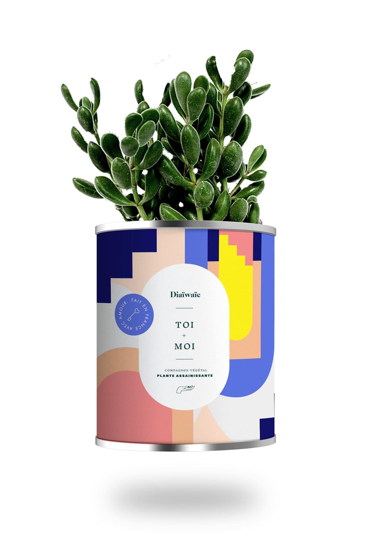 Diaïwaïe Cactus ou plante pot grand modèle toi + moi