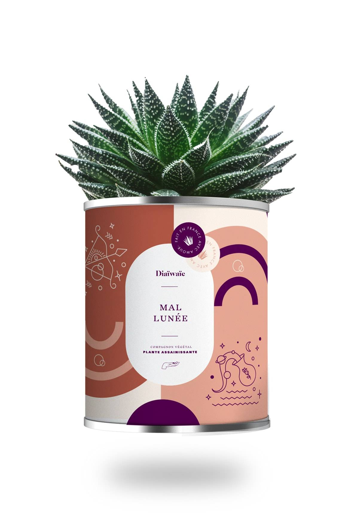 Diawae Cactus ou plante pot grand modle mal lunée