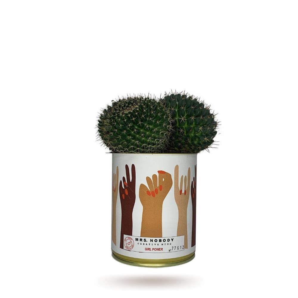 Mrs Nobody Cactus ou Succulente - Girl Power - Cactus Boule