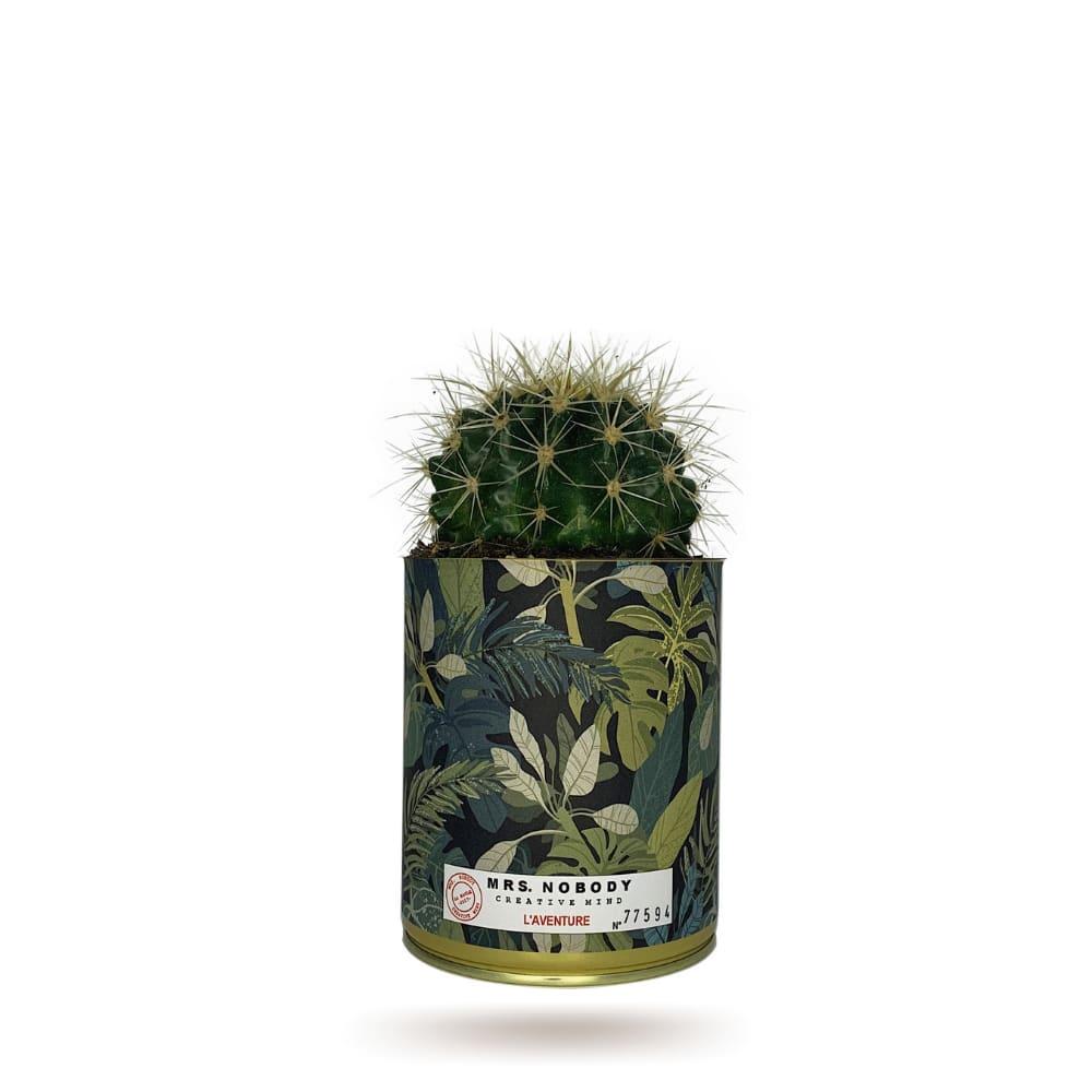 Mrs Nobody Cactus ou Succulente - L'Aventure - Cactus Boule