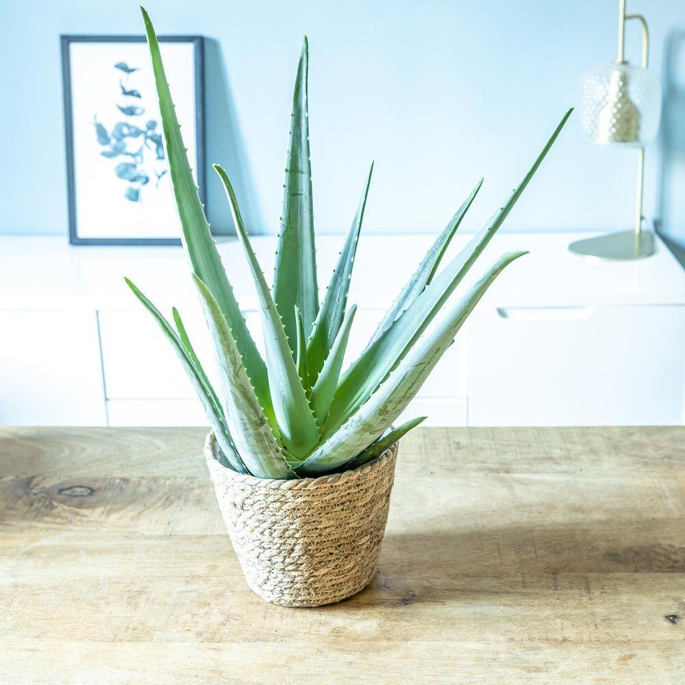 Réconciliation Végétale Aloe vera + cache-pot plante d'intérieur facile d'entretien