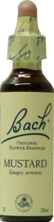 FLEUR BACH FAMADEM Elixirs & co fleurs de bach elixir mustard n° 21 20ml