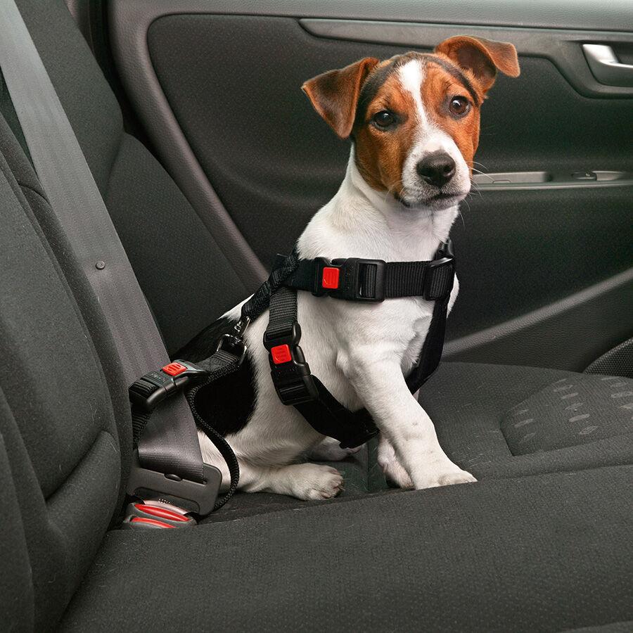 Karlie / Flamingo Harnais et laisse de sécurité voiture pour chien Taille : L