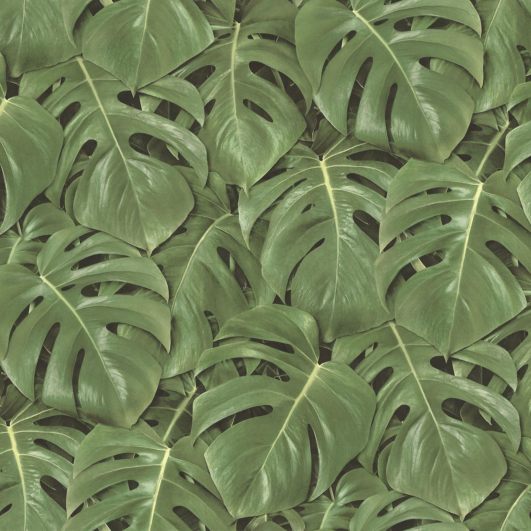 Freundin HOME COLLECTION Colle à papier peint Jungle tropicale feuilles Palm Tree le mur vinyle vert & noir