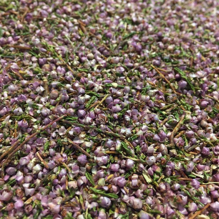 Louis Bruyère Bio Fleurs et feuilles 100g - Tisane Calluna vulgaris (L.) Hull