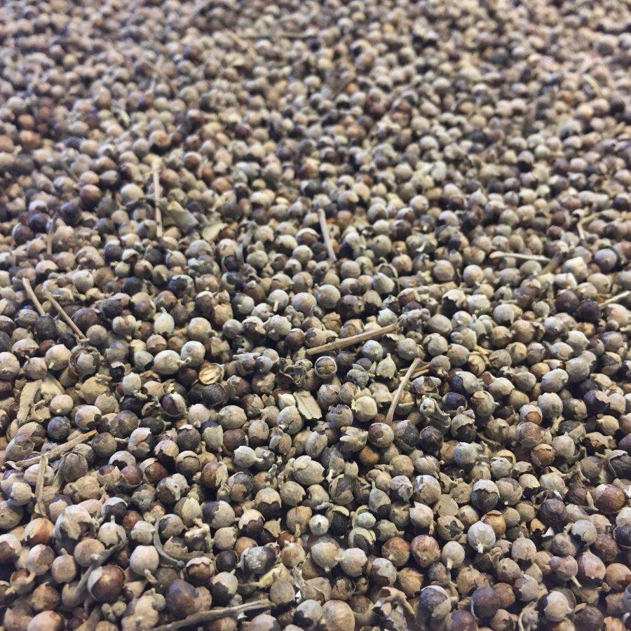 Louis Gattilier Bio - Fruit entier 100g - Tisane de Vitex agnus-castus L.