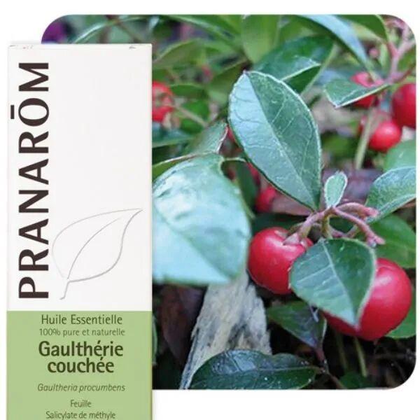 Pranarôm Gaulthérie couchée - Huile essentielle de Gaultheria procumbens 10 ml - Pranarôm