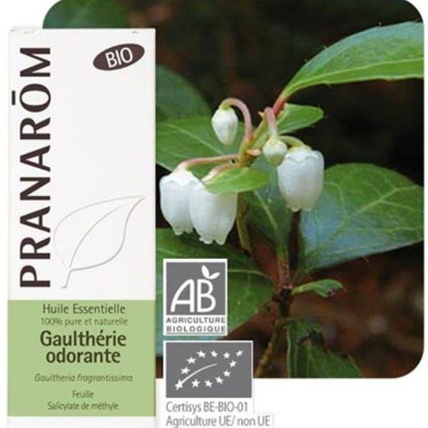 Pranarôm Gaulthérie odorante Bio -  Huile essentielle Gaultheria fragrantissima 10 ml - Pranarôm
