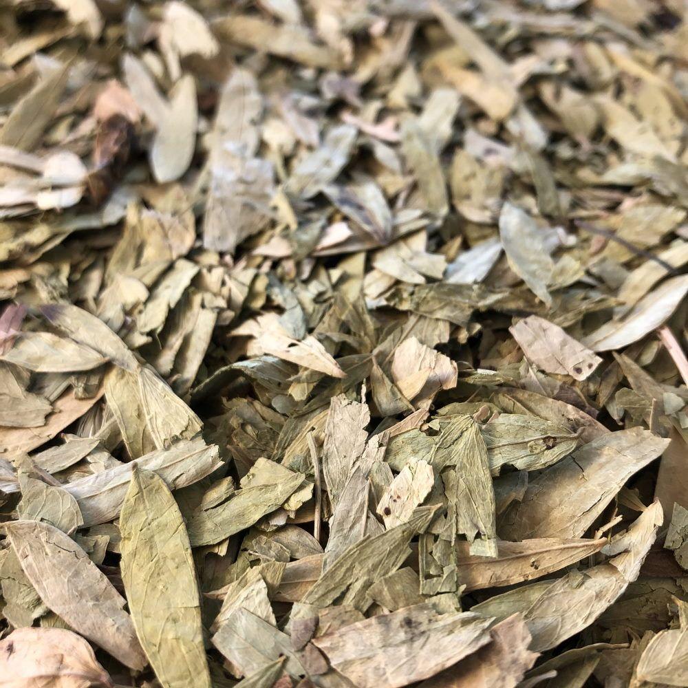 Louis Séné Tinnevelly - Feuilles entières 100g - Tisane de Cassia angustifolia