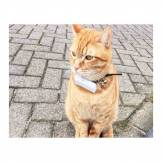 Weenect Tracker GPS Weenect pour chats