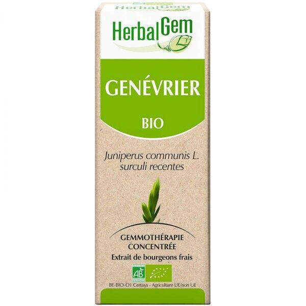 Genévrier Bio - Extrait de bourgeons frais - 50 ml