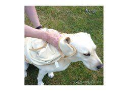 Serviette spéciale animaux - Vite au sec !