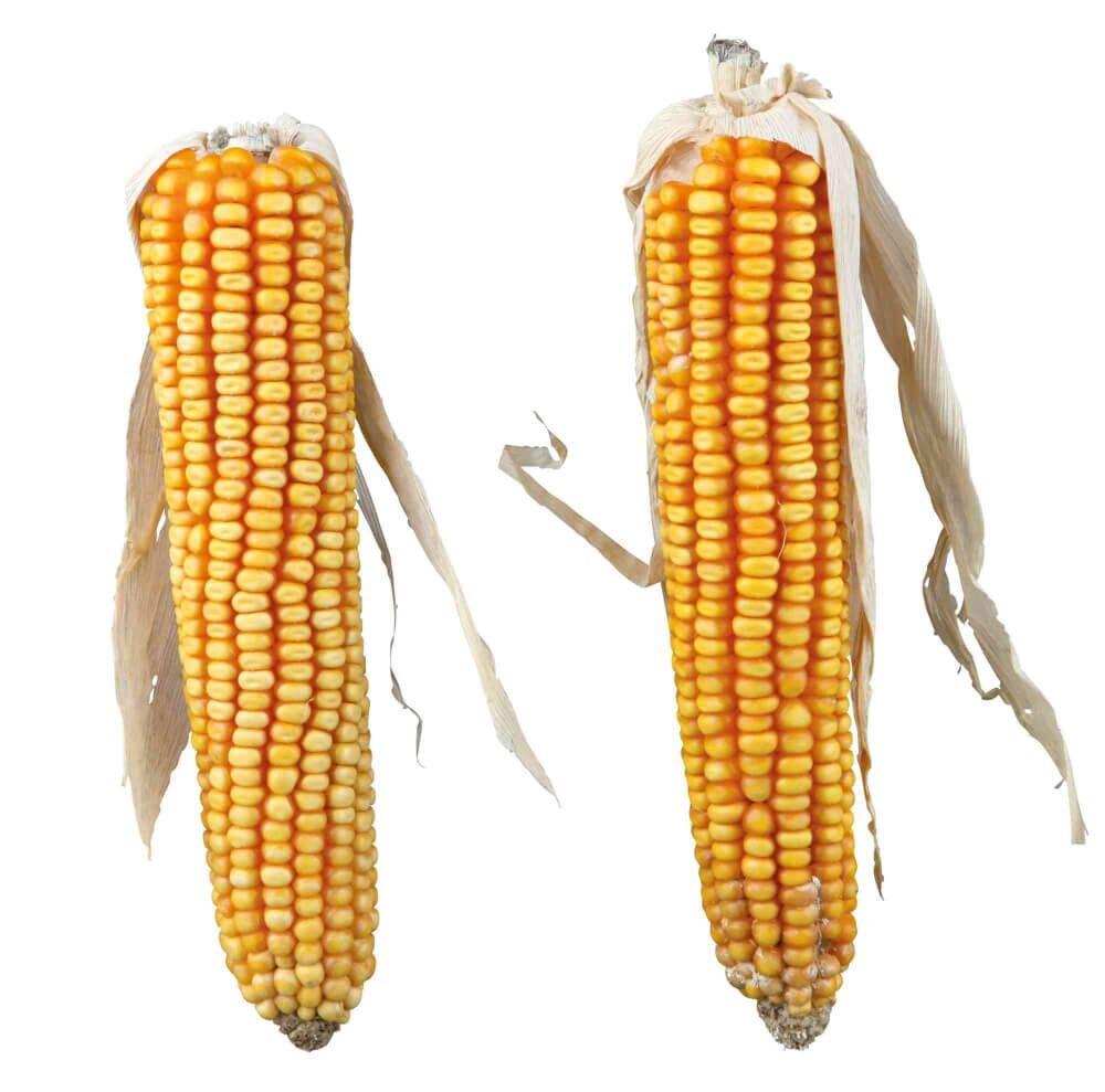 Trixie Pure Nature Épis de maïs