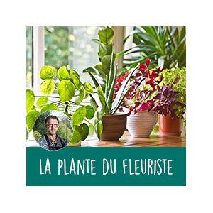 Interflora Plante fleurie du fleuriste