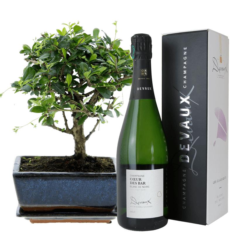 Interflora Bonsai et son champagne - Livraison par Chronopost - L'atelier Interflora - Interflora