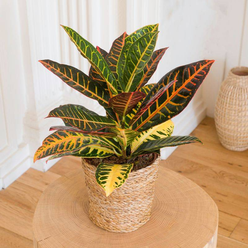Interflora Croton - Livraison par Chronopost - L'atelier Interflora - Interflora