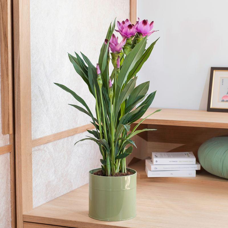 Interflora Curcuma et son cache-pot - Livraison par Chronopost - L'atelier Interflora - Interflora